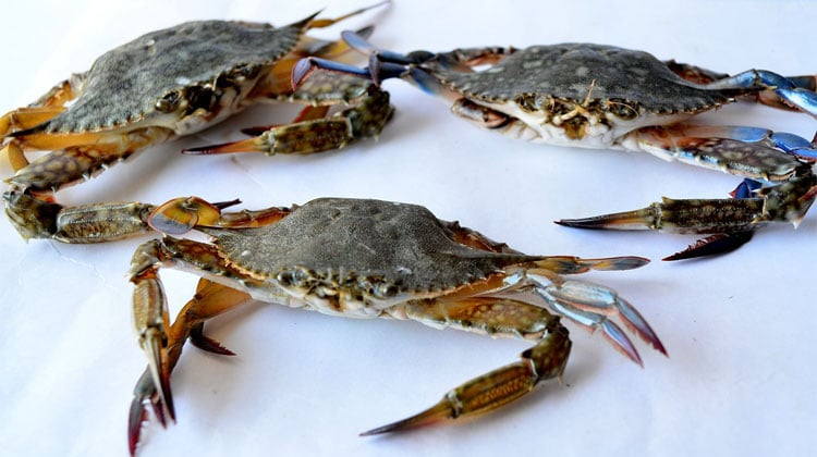 Three crabs