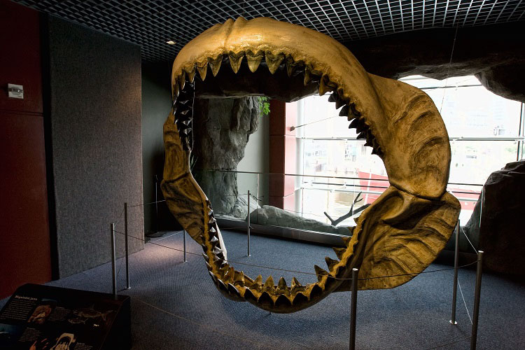 Megalodon jaws on display