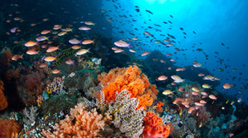 8 Best Diving Spots in the Philippines for your Aquaventures
